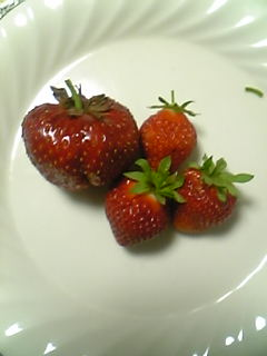 ジャンボイチゴ収穫!